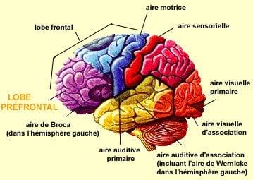 cerveau complet1