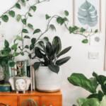 Les plantes d'intérieur : Un remède naturel pour soulager l'anxiété?